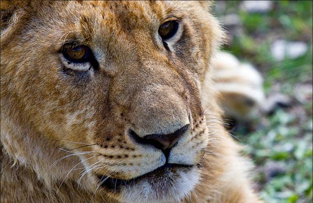 Львице понравилось фотографироваться