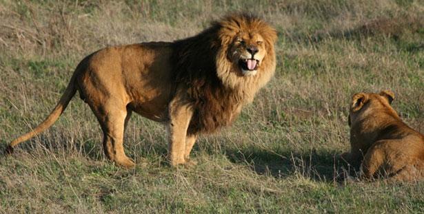 """Сафари парк львов """"Тайган"""""""