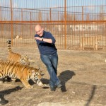 Tigry-v-parke