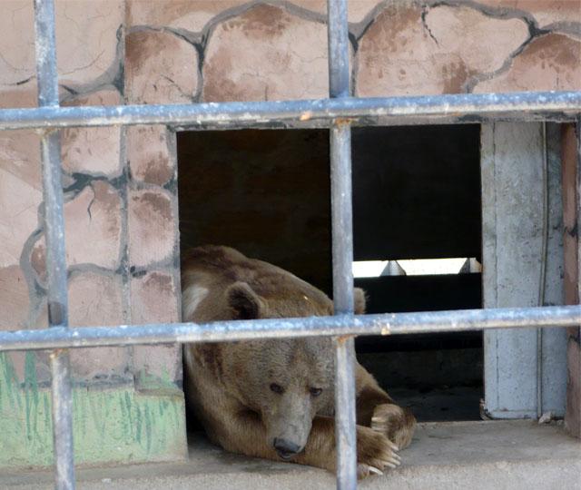 Медведь в зоопарке Евпатории