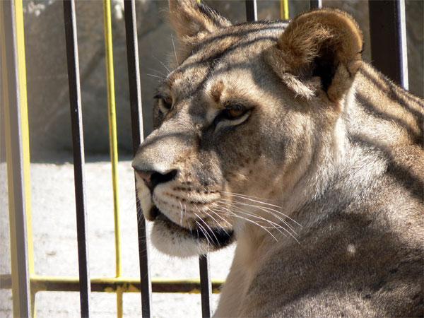 жара в симферопольском зоопарке