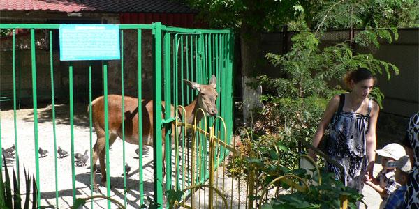 Благородная олениха Гюзель в Симферопольском зоопарке