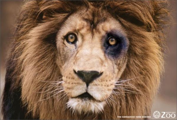 3161805-R3L8T8D-600-lion