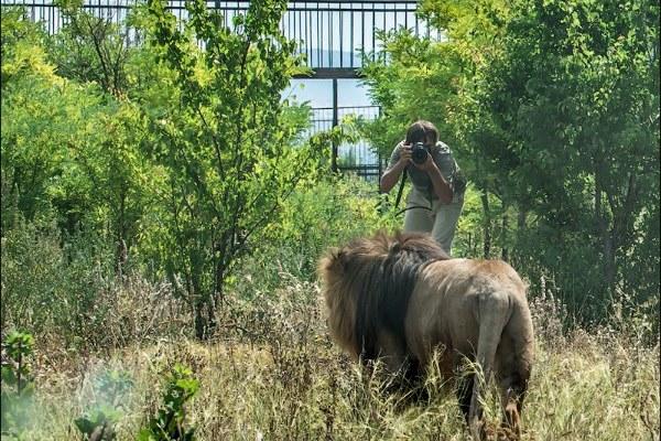 Парк львов Тайган с OstroFF. Август 2013