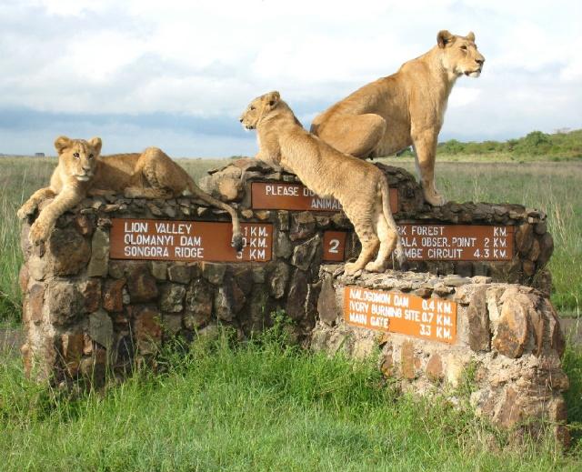 Nairobi-National-Park2