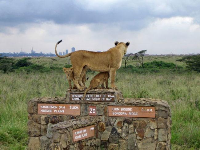 arabada-mahsur-kaldi-aslan-nairobi-1348223