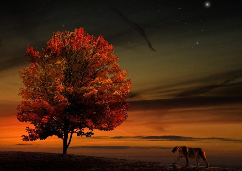 Life-Photoshop--2048x2560