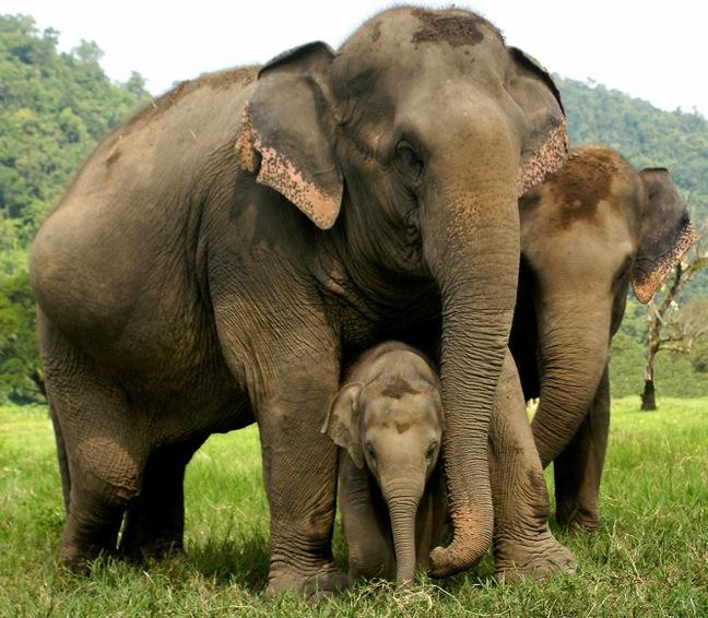 Elephant-Nature-Park-201