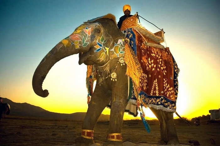 3275322_elephant1