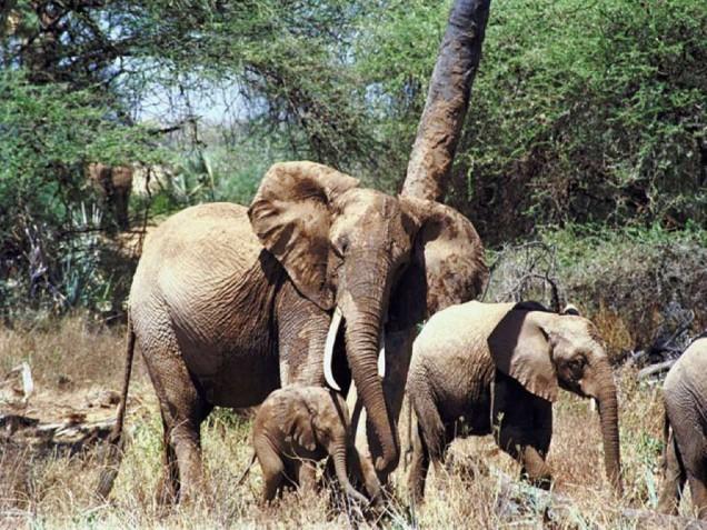 elefant_07_003